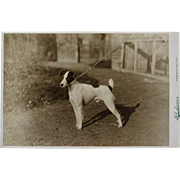 SOLD Antique Cabinet Photograph ~ Terrier Dog