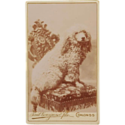 SALE CDV Photograph ~ French Poodle Dog