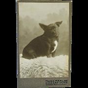 SALE Antique CDV Photograph ~ Sweet Dog