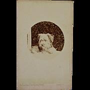 SALE Antique CDV Photograph ~ Adorable Dog