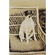 SALE Antique RPPC Dog Postcard