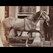 SALE Antique Cabinet Photograph ~ Trick Horse