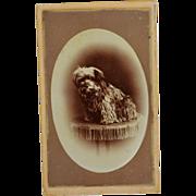 SALE Antique CDV Dog Photograph