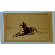 SALE Antique French Dog CDV Photograph