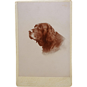 "SOLD Antique Cabinet Dog Portrait Photograph ~ Retriever Named ""Nick"""