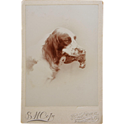 SOLD Antique Cabinet Portrait Photograph ~ Hunting Dog