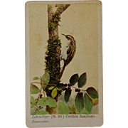 Hand Colored CDV Bird Photograph ~ Eurasian Treecreeper
