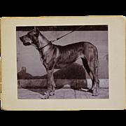 """Antique Dog Photograph ~ Mastiff Named """"Lola"""""""