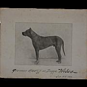 Antique Dog Photograph ~ German Mastiff C1899