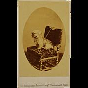 SALE Antique CDV Photograph ~ Sad Terrier Dog