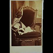 SALE Antique CDV Sleeping Dog Photograph