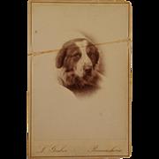 Antique Cabinet Dog Photograph ~ Portrait Of A Hound