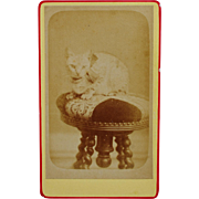SOLD Antique French Cat CDV Photograph ~ Cute Kitty