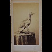 SOLD Antique CDV Photograph ~ Posing Greyhound Dog