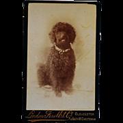 Antique CDV Dog Photograph ~ Black Poodle