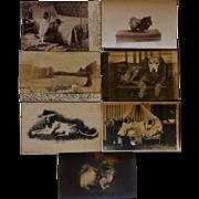 SOLD 13 Antique Dog Postcards