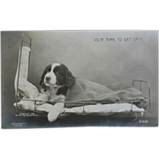 "SOLD Antique Dog Postcard ~ ""Is It Time To Get Up?"" - Red Tag Sale Item"