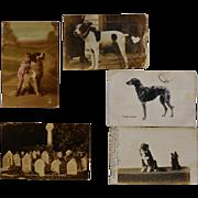 SOLD 5 Antique Dog Postcards ~ RPPC Handsome Hound