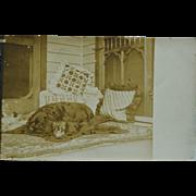 Antique RPPC Postcard ~ Dog On Bear Skin Rug