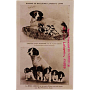 SALE Antique French Postcard ~ Mother Dog With Pups
