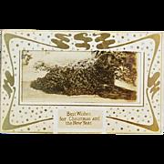 SALE C1907 Antique Christmas Dog Postcard ~ Beautiful Retriever