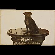 "WW1 Postcard ~ ""Buller"" H.M.S. Indomitable Dog Mascot"