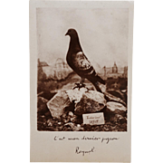 SOLD WW1 Postcard ~ Major Raynal's Homing Pigeon Vaillant