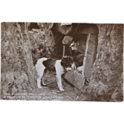 """SOLD WW1 Dog Postcard ~ """"The Soldiers Daily Life, A Favorite Trench Companion"""""""
