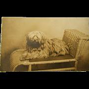 SOLD Antique AZO RPPC Postcard ~ Recumbent Dog - Red Tag Sale Item