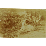 "SOLD Antique RPPC Postcard ~ Dog Named ""Sunny"" - Red Tag Sale Item"