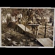 SALE French WW1 War Dog Photograph