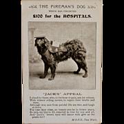 "SALE ""Jack"" Fireman's Collection Dog For Charity Postcard"