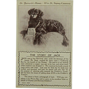 "SALE ""The Story Of Jack"" Collection Dog For Charity Postcard"