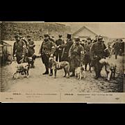 SALE French WW1 Postcard ~ Ambulance/Red Cross Dogs