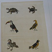 William F. Martyn Natural History Dictionary 1785 Vintage Print Turtles Birds Snake Plate XCIX