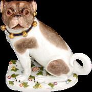 """SALE RARE Antique Dresden Porcelain PUG Male, 8"""" Dog, Hand Painted with Unique Floral Bas"""