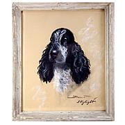 """SALE Original Antique Pastel Portrait of a Dog, Spaniel, """"Skylight"""" in Frame, Signed"""