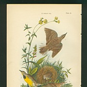 SOLD Audubon Bird Print - 1888 Color Litho of Meadow Lark - Red Tag Sale Item