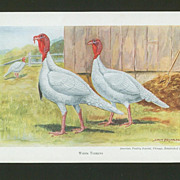White Turkeys - Edwin Megargee Print