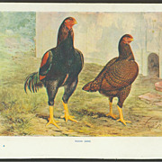J. W. Ludlow Poultry Print - Indian Game Chickens