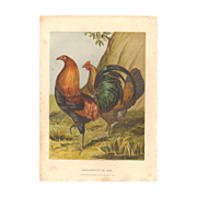 Harrison Weir Chromolithograph of Black-Breasted Red Game Chickens