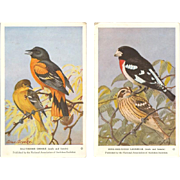 Audubon Society Bird Series Postcards - Oriole and Grosbeak