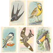 Arm & Hammer Advertising Cards - 1938 Bird Series