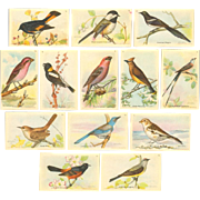 Arm & Hammer Advertising Cards - Eighth Series of Useful Birds