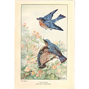 Nellie Pairpoint Color Print - Bluebirds