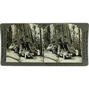 SOLD Keystone View of Wawona The Oldest Living Tree on Earth