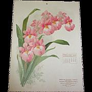 SOLD 1906 Feb Paul de Longpre Calendar Page Orchids