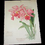SOLD 1906 June Paul de Longpre Calendar Page Orchids