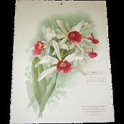 SOLD 1906 Sept Paul de Longpre Calendar Page Orchids