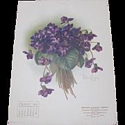 SOLD 1906 Aug Paul de Longpre Calendar Page Purple Violets